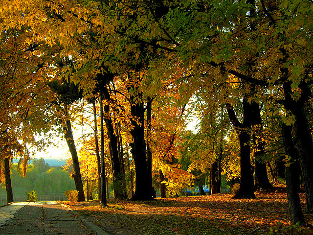 640px-Parcul_Herăstrău